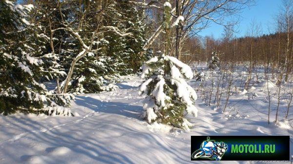 Ёлочки в снегу